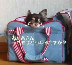 blog2008111403.jpg