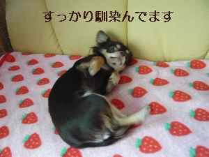 blog2008111404.jpg