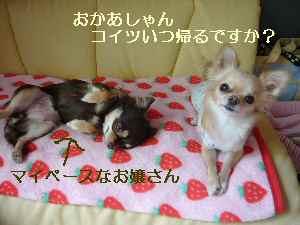 blog2008111405.jpg