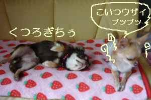 blog2008111406.jpg