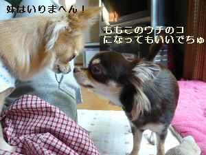 blog2008111407.jpg
