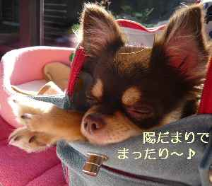 blog2008111412.jpg