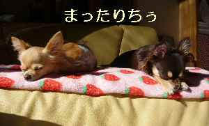 blog2008111414.jpg