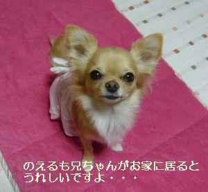 blog20081119.jpg