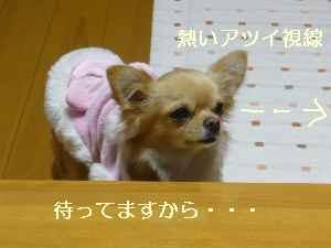 blog2008112104.jpg