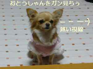 blog2008112105.jpg