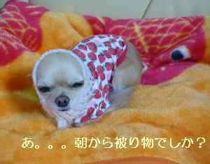 blog2008112301.jpg
