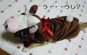 blog2008112402.jpg