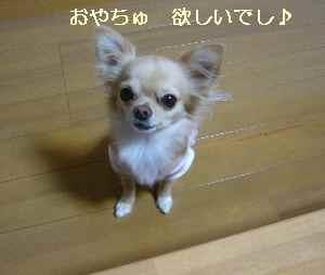 blog2008112502.jpg