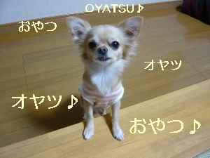 blog2008112503.jpg