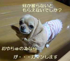 blog2008112504.jpg
