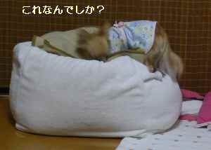 blog2008112601.jpg