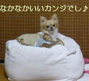 blog2008112603.jpg