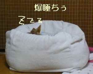 blog2008112604.jpg