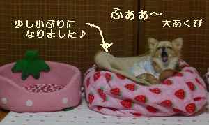blog2008112701.jpg