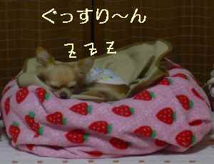 blog2008112702.jpg