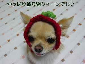 blog2008112902.jpg