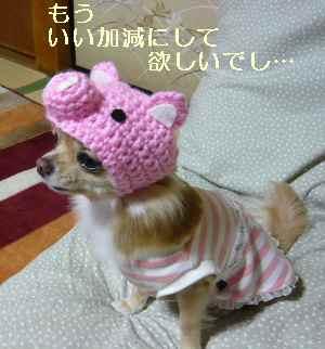 blog2008123004.jpg