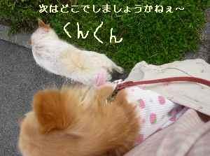 blog2008192902.jpg