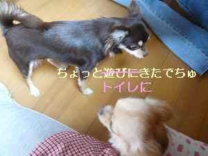 blog2008192903.jpg