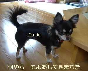blog2008192904.jpg