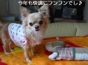 blog2009010602.jpg