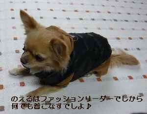 blog2009010702.jpg