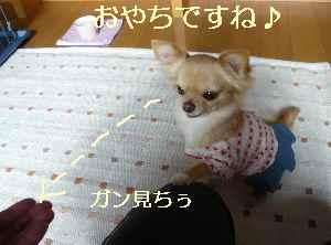 blog2009011302.jpg