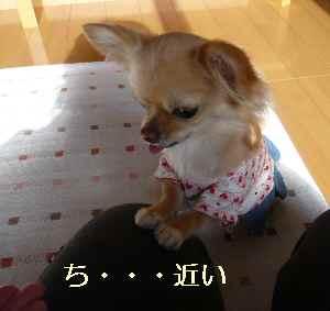 blog2009011303.jpg