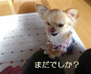blog2009011304.jpg