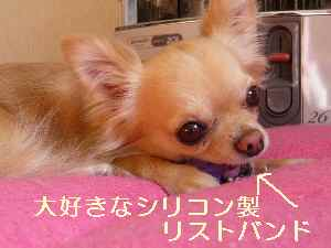 blog2009011602.jpg