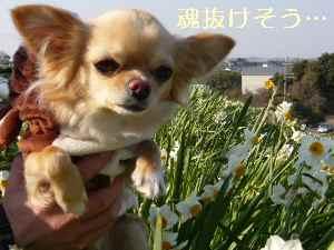 blog2009011704.jpg