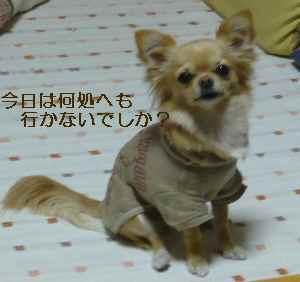 blog2009012802.jpg