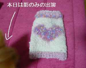 blog2009012901.jpg