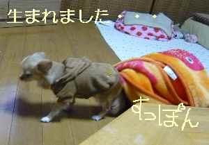 blog2009020505.jpg