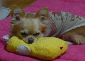 blog2009021102.jpg