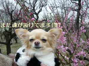 blog2009021306.jpg