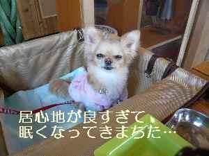 blog2009021504.jpg