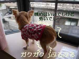 blog2009021601.jpg