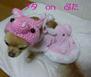 blog2009021703.jpg
