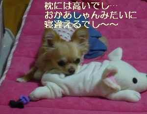 blog2009021806.jpg