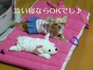 blog2009021807.jpg
