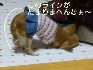 blog2009021902.jpg
