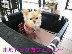blog2009022201.jpg