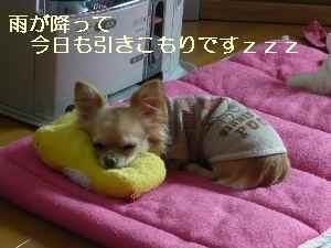 blog2009022501.jpg