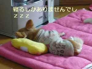 blog2009022502.jpg