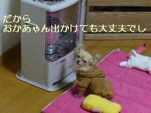 blog2009022802.jpg