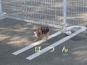 blog20090301.jpg