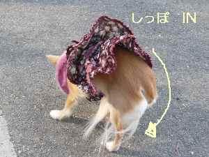 blog20090302.jpg
