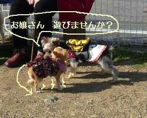 blog20090303.jpg